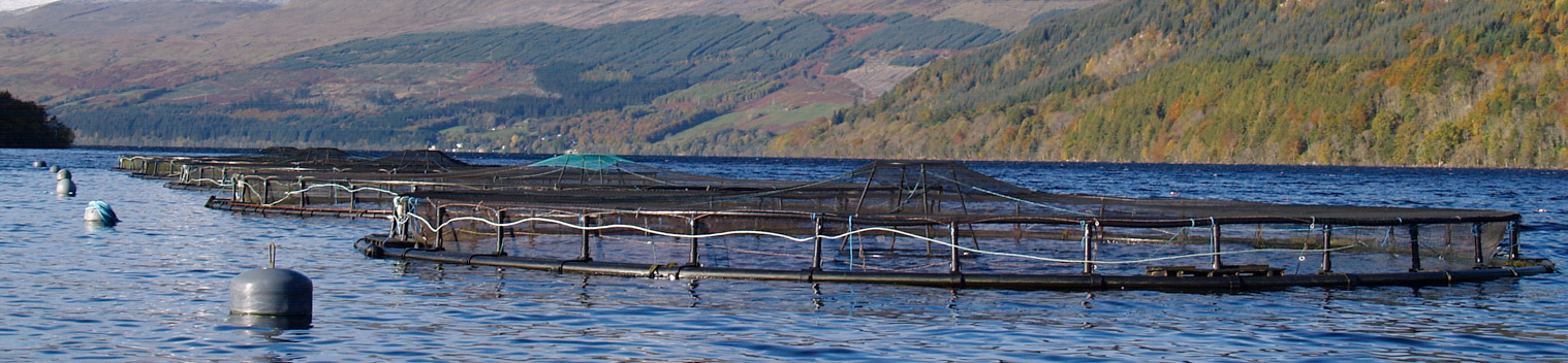 Kames Sea Trout Farm