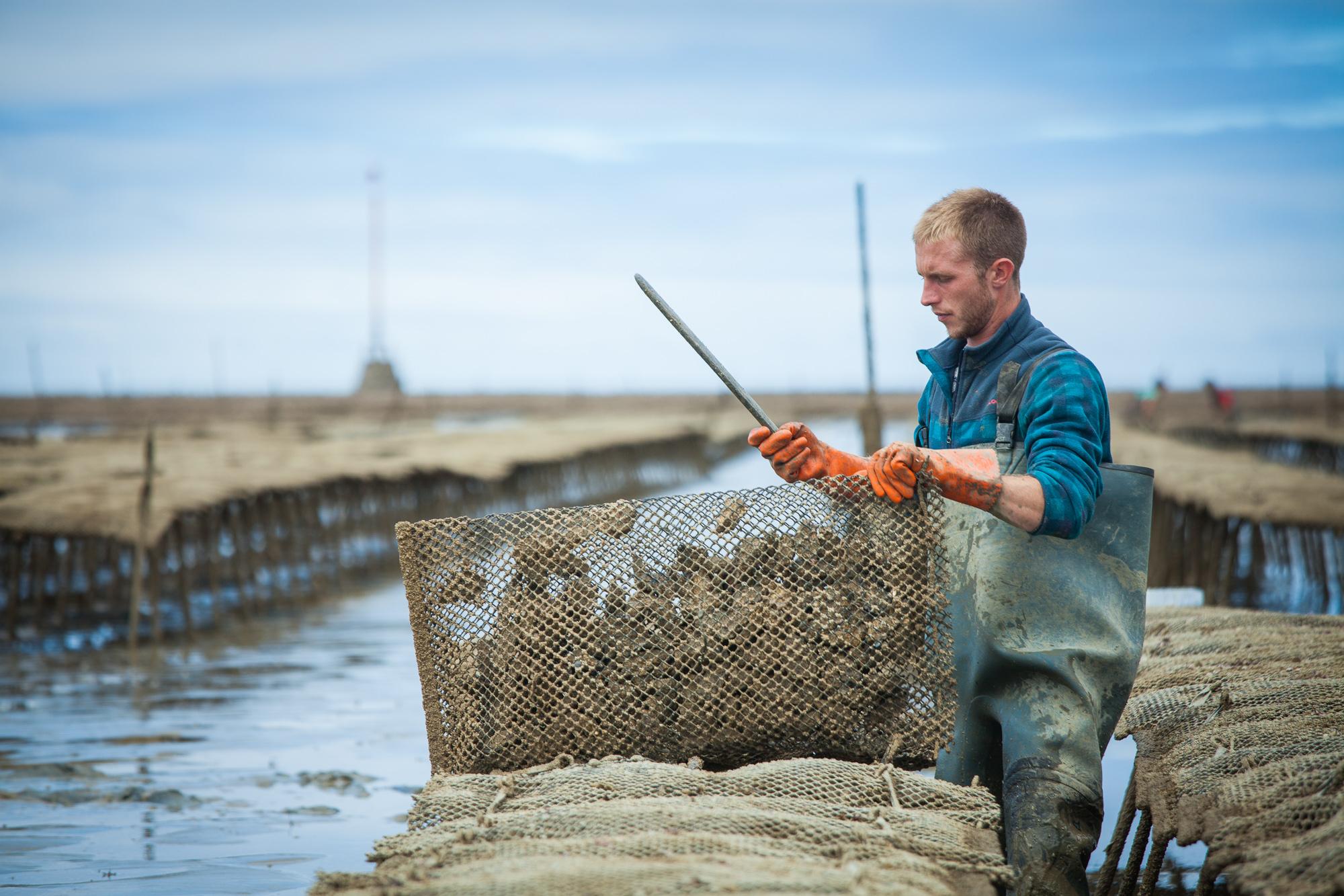 huîtres Vendéennes du large écosystème exceptionnel